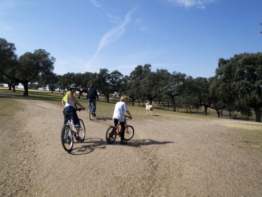 Cortijo Oropesa: Paseos en bici / Biking