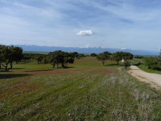 Cortijo Oropesa: Vistas con Sierra de Gredos / View with Sierra de Gredos