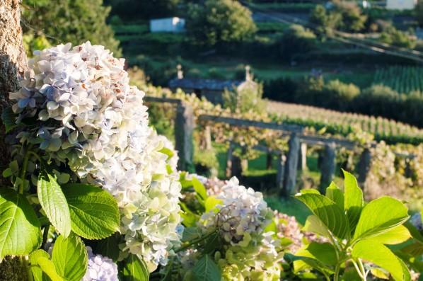 Casa Pedralobo: garden and surrounding vineyards